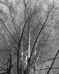 A stark tree in Kirkstall.  #lookup #leeds #kirkstall #kirkstallforge #blackandwhitephotography #snapseed #iphonephotography #autumn #instatree #tree #leedslife