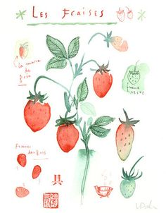 Strawberries original watercolor painting fruit illustration botanical poster food art kitchen decor red fruits.