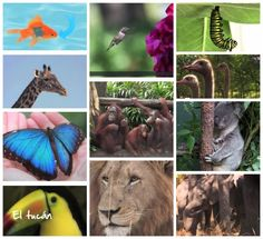 These fabulous Earth Day videos for kids set around the world give in-depth views on animals, their habitats, peculiar behaviors, characteristics and more! Geography For Kids, Geography Lessons, World Geography, Earth Day Video, Butterfly Life Cycle, Asian Elephant, Majestic Animals, Australian Animals, Science And Nature