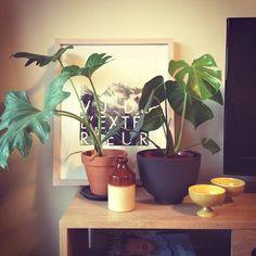 Bigass Philodendron, and a Monstera deliciosa <3