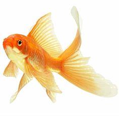 рыбка: 22 тыс изображений найдено в Яндекс.Картинках