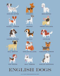 Dogs of the world by Lili Chin