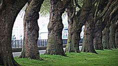 Dark Monolithic Trees at Wandsworth Park