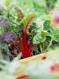 March Tips for Gardening in the Midwest