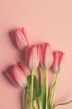 Items similar to Pink Tulip Wall Art - Flower Photograph - Bouquet - Romantic Art - Love - Cottage Chic Wall Art - Modern Minimalist Art - Dreamy Floral Art on Etsy Frühling Wallpaper, Spring Wallpaper, Flower Background Wallpaper, Flower Phone Wallpaper, Tumblr Wallpaper, Flower Backgrounds, Pink Tulips, Tulips Flowers, Pretty Flowers