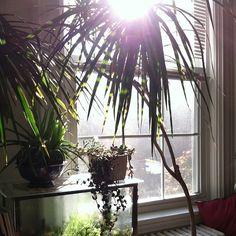 #plants #indoorjungle #houseplants