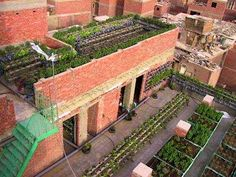 amazing rooftop and vertical agriculture in Cairo