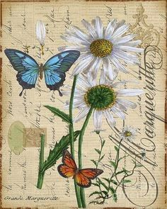 Shop for Jean Plout 'Botanical - Daisey Grande Marqueritte Damask' Canvas Art. Get free delivery On EVERYTHING* Overstock - Your Online Art Gallery Store! Vintage Butterfly, Butterfly Art, Vintage Flowers, Flower Art, Butterflies, Botanical Art, Botanical Illustration, Vintage Paper, Vintage Art