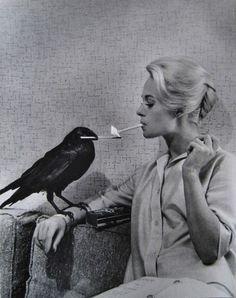 trop fort ce corbeau !!