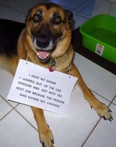 The 100 Best Dog Memes Ever The 100 Best Dog Memes Ever,coole Hunde. 100 Dog Memes That Will Keep You Laughing For Hours Funny Animal Jokes, Funny Dog Memes, Cute Funny Animals, Funny Animal Pictures, Memes Humor, Cute Baby Animals, Funny Cute, Funny Dogs, Funny Photos
