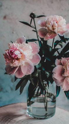 One of the most romantic plants and flowers on earth - Peony becomes it's label Peonies Wallpaper, Flower Wallpaper, Nature Wallpaper, Photo Wallpaper, Wallpaper Backgrounds, Iphone Wallpaper Fall, Screen Wallpaper, Flower Aesthetic, Ikebana