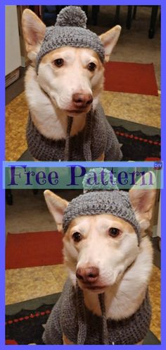 Dog Sweater - Free Patterns With the holidays so close and everyone excited, don't leave your dog out on the fun! Why not make him a Crocheted Dog Sweater for a great Christmas Crochet Dog Sweater Free Pattern, Crochet Dog Patterns, Crochet Motifs, Dog Hats Crochet, Crochet For Dogs, Animal Sweater, Knit Dog Sweater, Dog Sweaters, Youtube Crochet