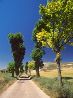 Pilgrimage Road, El Camino de Santiago de Compostela, Castile, Spain  ... definitely on my to-do list.
