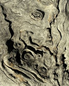face in an old tree by Scribbles With Cameras, via Flickr