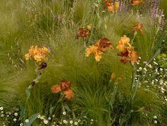 chelsea flower show 2007, jinny blom