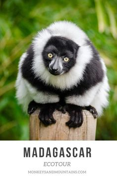madagascar culture travel On our Madagascar Tour, youll hike in 3 national parks, visit community reserves, and see lemurs. Youll also prepare a treat for lemurs at a reserve! Madagascar Culture, Madagascar Travel, Vacation Is Over, Winter Trees, Prim Christmas, Country Christmas, Christmas Trees, Christmas Decor, Africa Travel
