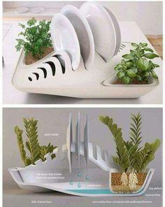 Scolapiatti con piante