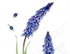 """Check out new work on my @Behance portfolio: """"muscari flower"""" http://be.net/gallery/36332643/muscari-flower"""