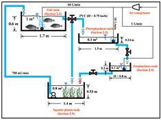 Sustainability | Free Full-Text | Integrated Multi-Trophic Recirculating Aquaculture System for Nile Tilapia (Oreochlomis niloticus)