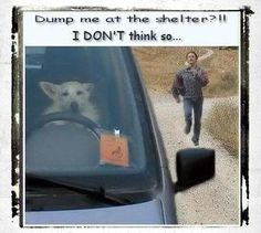 Dump me at the shelter?