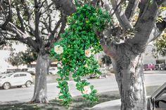 "Geranium Street's 34"" artificial cream azaleas adorned on a tree limb."
