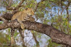 Great photo by Brendon Cremer