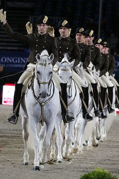 Lipizzaner horses - Spanish Riding School of Vienna