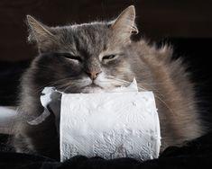 Durchfall bei Katzen – Alle Infos auf einen Blick