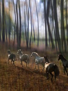 all-things-bright-and-beyootiful: Horses by Milan Malovrh - Faith Hope Love