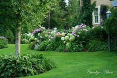 Hydrangeas, hostas, daylilies, phlox. There is also ferns in parts of this yard. // warrengrovegarden