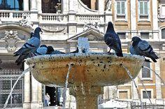 Pigeons in Santa Maria Maggiore, Rome