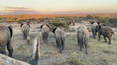 Integrity, Elephant, Meet, Horses, Animals, Instagram, The Beast, Animales, Data Integrity