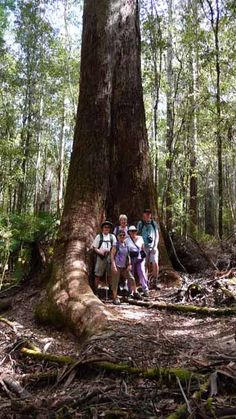 Tasmanian Wilderness #World heritage