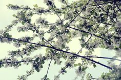 flower garland by mrs. french, via Flickr