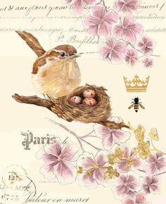 Wrens Nest 2