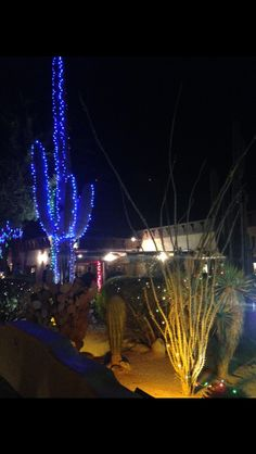 Christmas, in Tucson. This picture was taken outside of El Corral Restaurant . Picture by me. State Of Arizona, Tucson Arizona, Christmas Light Displays, Christmas Lights, Xmas, Large Holiday Homes, Cactus Light, Desert Life, Big Garden