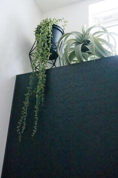 【連載】プチプラなのに高見え!我が家のニトリアイテムをご紹介します | folk Miscellaneous Goods, Green Flowers, Planting Succulents, Interior And Exterior, Cactus, Planter Pots, Plants, Room, House