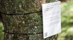 The Singing Trees of Tremough