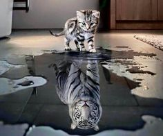 Inside every kitten/cat is a tiger waiting to pounce..