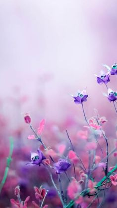 Purple Flower Wallpaper Photo For Desktop Wallpaper « Long Wallpapers Free Flower Wallpaper, Purple Flowers Wallpaper, Nature Wallpaper, Pink Wallpaper Pc, Wallpaper Designs, Computer Backgrounds, Wallpaper Backgrounds, Laptop Wallpaper, Screen Wallpaper