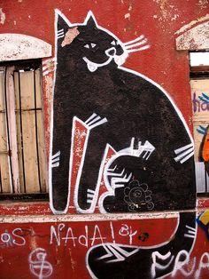 Graf valparaiso black cat