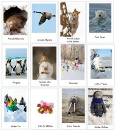winter nonfiction reader collection image