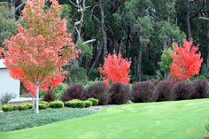 Robert Boyle Landscaping - Red Hill 1