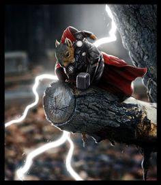 Thor squrriel