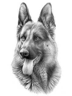 482 Best Gsd Drawings Paint Images On Pinterest In 2018 Pencil - German-shepherd-drawings