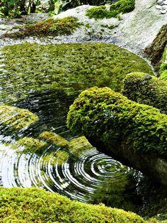 """Ripple""    A small, moss-covered fountain at a sub-temple of Nanzen-ji in Kyoto (南禅寺塔頭寺院にて)"