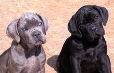 Risultati immagini per corso cane cucciolo