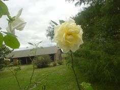 Las rosas de mi vieja, obvio que las mas lindas