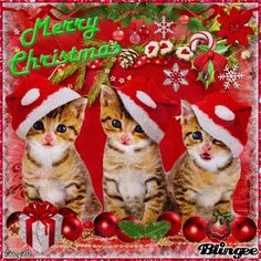 Christmas Kittens Animated Pictures for Sharing Merry Christmas Cat, Cat Christmas Cards, Merry Christmas Pictures, Hello Kitty Christmas, Christmas Animals, Vintage Christmas, Christmas Holidays, Dog Gifts, Morning Qoutes
