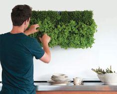 mur-vegetal-dinterieur-mod